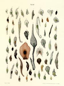 conhecimentos orquideas